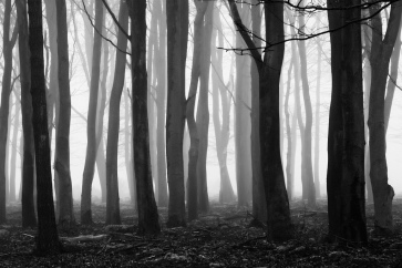 Dark Forest picture for Second Blog Post